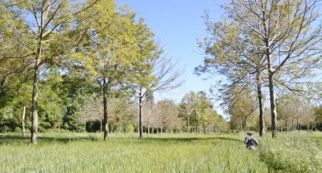 Příklad agrolesnictví ve Francii. Foto J. Weger