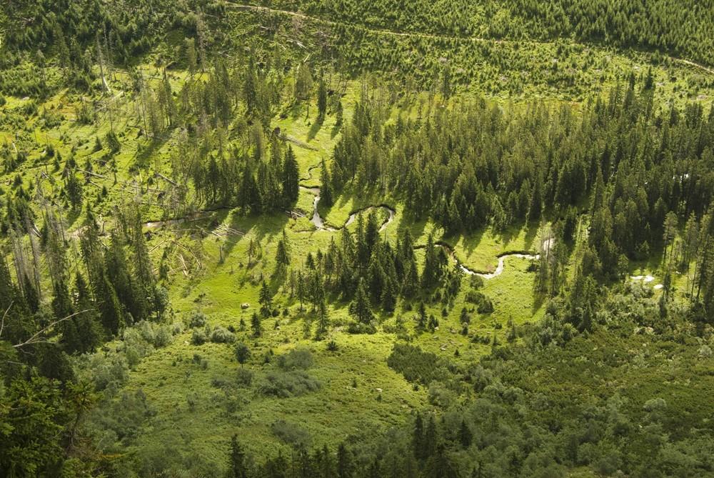 Stabilizace lesních porostů v KRNAPu (2. část)