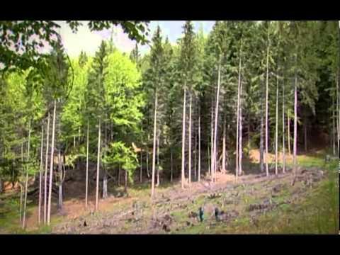 Toulky s lesníkem - zima (MZE, VÚLHM)